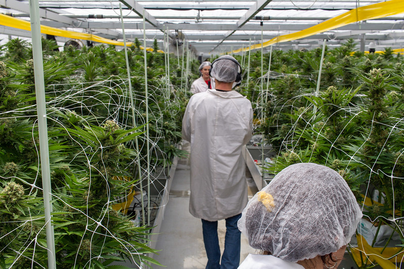 Cannabis Broadcasting Network on set